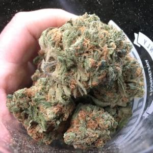 Purple Lemon Haze