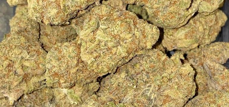 Buy Cannabis Online In Malta Buy Marijuana Online Malta Buy Weed Online In Malta Order Marijuana Online Malta Buy Hashish Online MaltaWeed Dispensaries MT